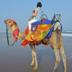 cheap-camel-riding-dubai
