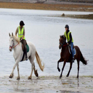 beach horse riding uae