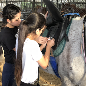 horse grooming training courses