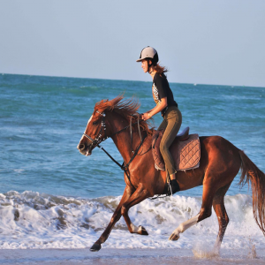 horse riding in dubai beach